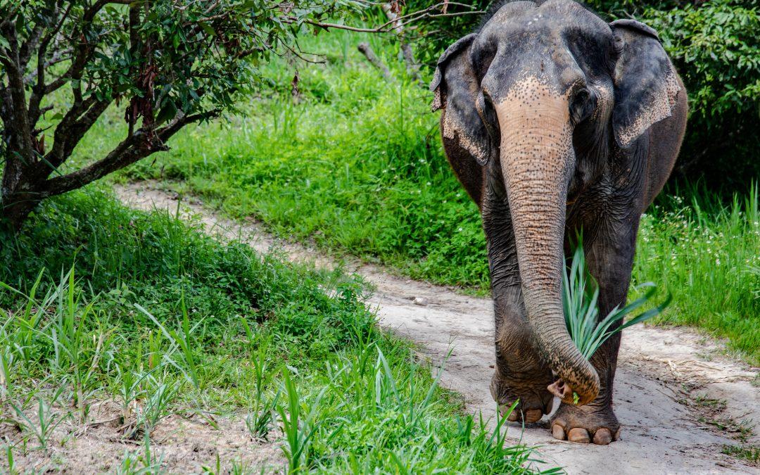 Elephant Heaven…